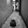 Back alley cat