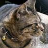 頭突き猫2